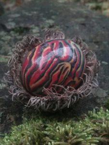 burr acorn egg